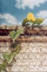 Obras de arte: America : Paraguay : Asuncion : Asuncion-capital : Sin Título