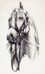 Obras de arte: Europa : España : Melilla : Melilla_ciudad : caballo