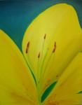 Obras de arte: Europa : Reino_Unido : Devon : Torquay : Azucena amarilla