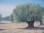 Obras de arte: Europa : España : Valencia : valencia_ciudad : olivos