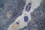Obras de arte: Europa : España : Galicia_Pontevedra : vigo : hacia mi destino