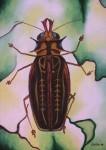 Obras de arte: Europa : España : Galicia_Pontevedra : vigo : escarabajo: símbolo de renacer
