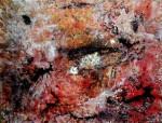 Obras de arte: Europa : España : Catalunya_Barcelona : llica_d´amunt : DISPERSIÓ VERMELLA
