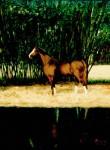 Obras de arte: America : Brasil : Rio_de_Janeiro : Rio__de_Janeiro : Cavalo