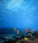 Obras de arte: America : México : Baja_California_Sur : lapaz : Arrecife tropical
