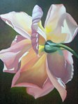 Obras de arte: America : Colombia : Santander_colombia : Bucaramanga : rosa