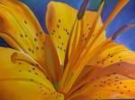 Obras de arte: America : Colombia : Santander_colombia : Bucaramanga : lirio amarillo