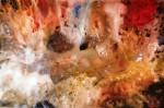 Obras de arte: Europa : España : Catalunya_Barcelona : llica_d´amunt : galaxia