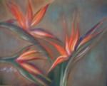 Obras de arte: America : Colombia : Valle_del_Cauca : Palmira : AVES DEL PARAÍSO