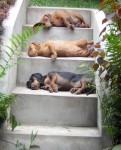 Obras de arte: America : Perú : Lima : miraflores : TRI MAROTE