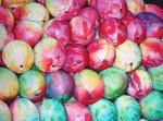 Obras de arte: America : Bolivia : Santa_Cruz-Bolivia : santa_cruz_de_la_sierra : mangos1