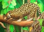 Obras de arte: America : Bolivia : Santa_Cruz-Bolivia : santa_cruz_de_la_sierra : jaguar