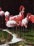Obras de arte: America : Bolivia : Santa_Cruz-Bolivia : santa_cruz_de_la_sierra : flamingo1