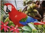 Obras de arte: America : Bolivia : Santa_Cruz-Bolivia : santa_cruz_de_la_sierra : ara.roja