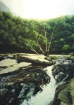 Obras de arte: Europa : España : Madrid : Valdemoro : Árbol seco en el río