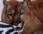 Obras de arte: America : México : Jalisco : zapopan : fauna salvaje