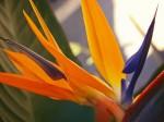 Obras de arte: Europa : España : Murcia : cartagena : Mágia de color