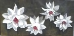Obras de arte: America : Argentina : Buenos_Aires : Capital_Federal : flores blancas