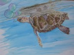 Obras de arte: Europa : España : Canarias_Santa_Cruz_de_Tenerife : Santa_Cruz_Tenerife_ciudad : tortuga a todo color