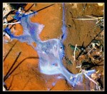 Obras de arte: Europa : España : Cantabria : Santander : BROWN AND BLUE