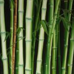Obras de arte: America : Chile : Bio-Bio : Concepción : bambú II