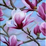 Obras de arte: America : Chile : Bio-Bio : Concepción : Magnolias