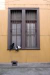 Obras de arte: America : Chile : Valparaiso : viña_del_mar : Ya !