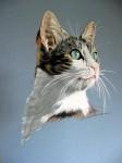 Obras de arte: Europa : España : Catalunya_Barcelona : ir_a_paso_2 : ¿qué miras , mi gato?