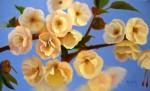 Obras de arte: America : Chile : Bio-Bio : Concepción : Primavera en flor