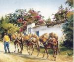 Obras de arte: America : Colombia : Sucre : sincelejo : ARRIERO ANTIOQUEÑO