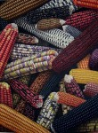 Obras de arte: America : Bolivia : Santa_Cruz-Bolivia : santa_cruz_de_la_sierra : maiz