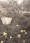 Obras de arte: Europa : España : Murcia : Murcia_ciudad : La fruta podrida