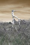 Obras de arte: Europa : España : Murcia : Murcia_ciudad : Fantasmas