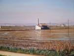 Obras de arte: Europa : España : Valencia : valencia_ciudad : arrozales