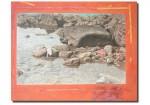 Obras de arte: Europa : España : Comunidad_Valenciana_Alicante : VILLENA : Las rocas