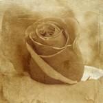 Obras de arte: Europa : España : Murcia : cartagena : Sueño de rosas