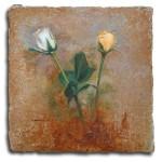 Obras de arte: Europa : España : Comunidad_Valenciana_Alicante : VILLENA : Rosa blanca y amarilla