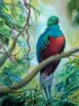 Obras de arte: America : Venezuela : Yaracuy : San_felipe : quetzal-1