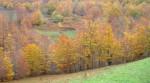 Obras de arte: America : Estados_Unidos : Iowa : Madrid_IA : Autumn in Paris