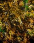 Obras de arte: America : México : Mexico_Distrito-Federal : Ciudad_Satelite : Simplemente onirico 3