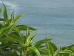 Obras de arte: America : Perú : Lima : Surco : Planta y Mar
