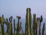 Obras de arte: America : Perú : Lima : Surco : Captus