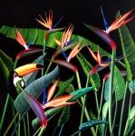 Obras de arte: America : Argentina : Cordoba : Cordoba_ciudad : Plants & Tucan