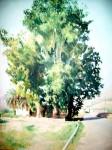 Obras de arte: Europa : España : Comunidad_Valenciana_Alicante : Xabia : Paisaje con árboles