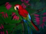 Obras de arte: America : Colombia : Santander_colombia : Bucaramanga : Guacamaya