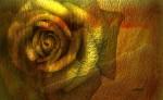 Obras de arte: Europa : España : Comunidad_Valenciana_Alicante : Ondara : rosa en luz