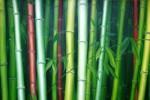 Obras de arte: America : Chile : Bio-Bio : Concepción : bambú 3