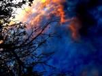 Obras de arte: America : Perú : Ucayali : PUCALLPA : Inmersión ramas en fondo entre azul y rojo