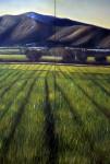 Obras de arte: America : Colombia : Santander_colombia : Bucaramanga : De la serie paisaje vallecaucano