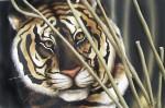 Obras de arte: America : México : Coahuila_de_Zaragoza : Torreón : tigre